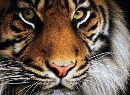 tigre SE depero fb